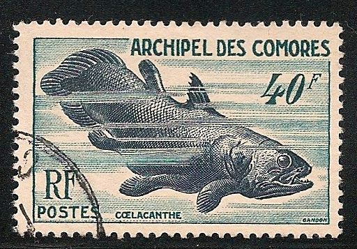 "A Comorian stamp expressing the country's relationship to the ""most beautiful fish"""
